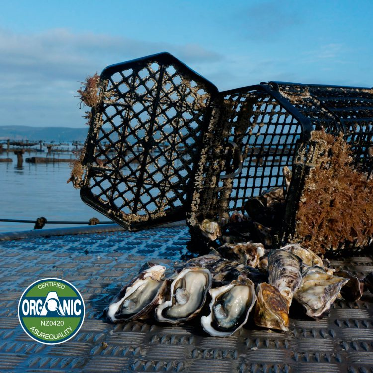 Quality assured organic Kaipara Oysters