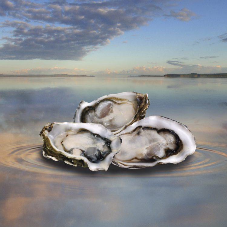 3 Kaipara Oysters against Karpara Harbour